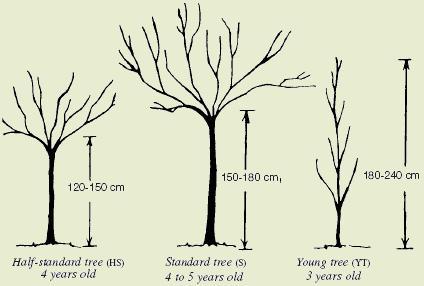 Morreys Nursery Trees